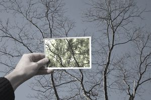 Man holding a frame up to a tree with no leaves and seeing the view with leaves