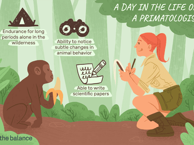 A day in the life of a primatologist: Endurance for long periods alone in the wilderness, Ability to notice subtle changes in animal behavior, Able to write scientific papers
