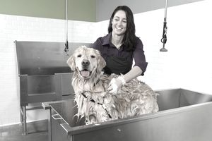 Golden retriever getting a bath at self service dog wash