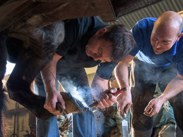 Farriers with a horse