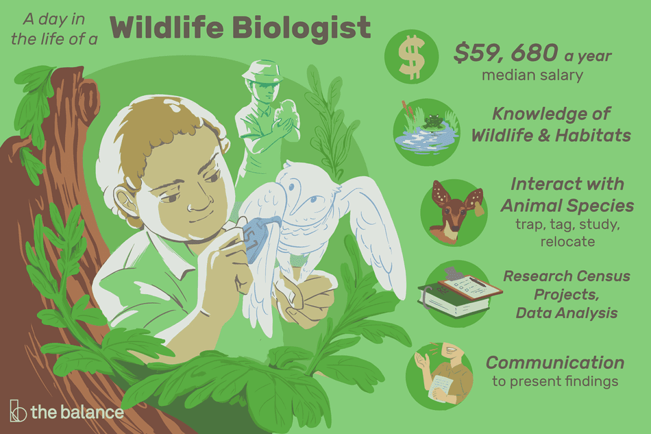 wildlife biologist job description  salary  skills   u0026 more