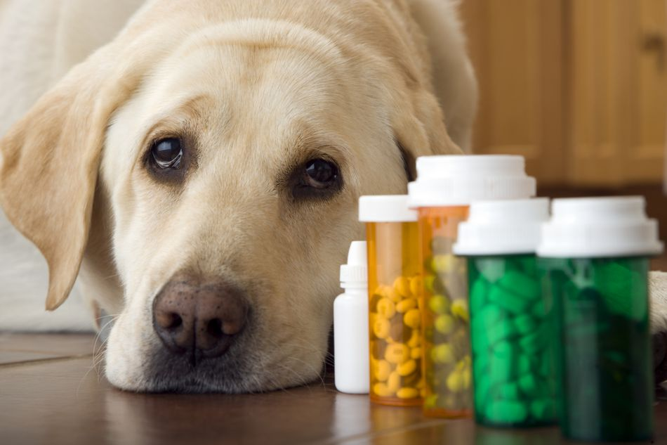 dog with prescriptions