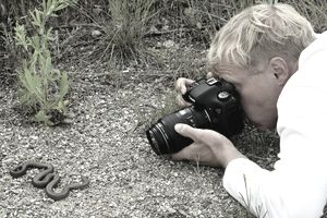 Biologist photographing an adult rubber boa (Charina bottae), southern Okanagan Valley, British Columbia