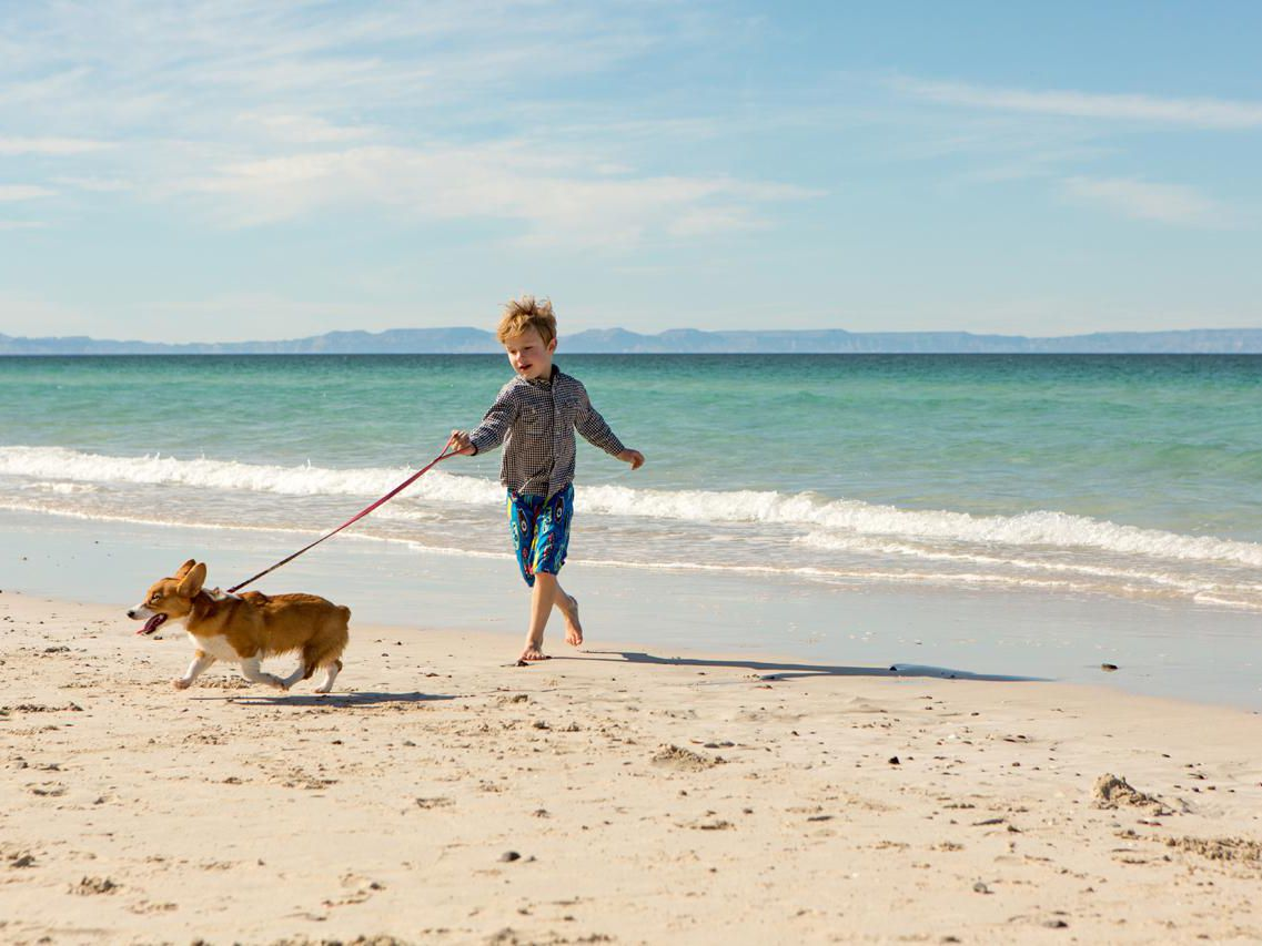 The Benefits of Dog-Walking Jobs for Kids