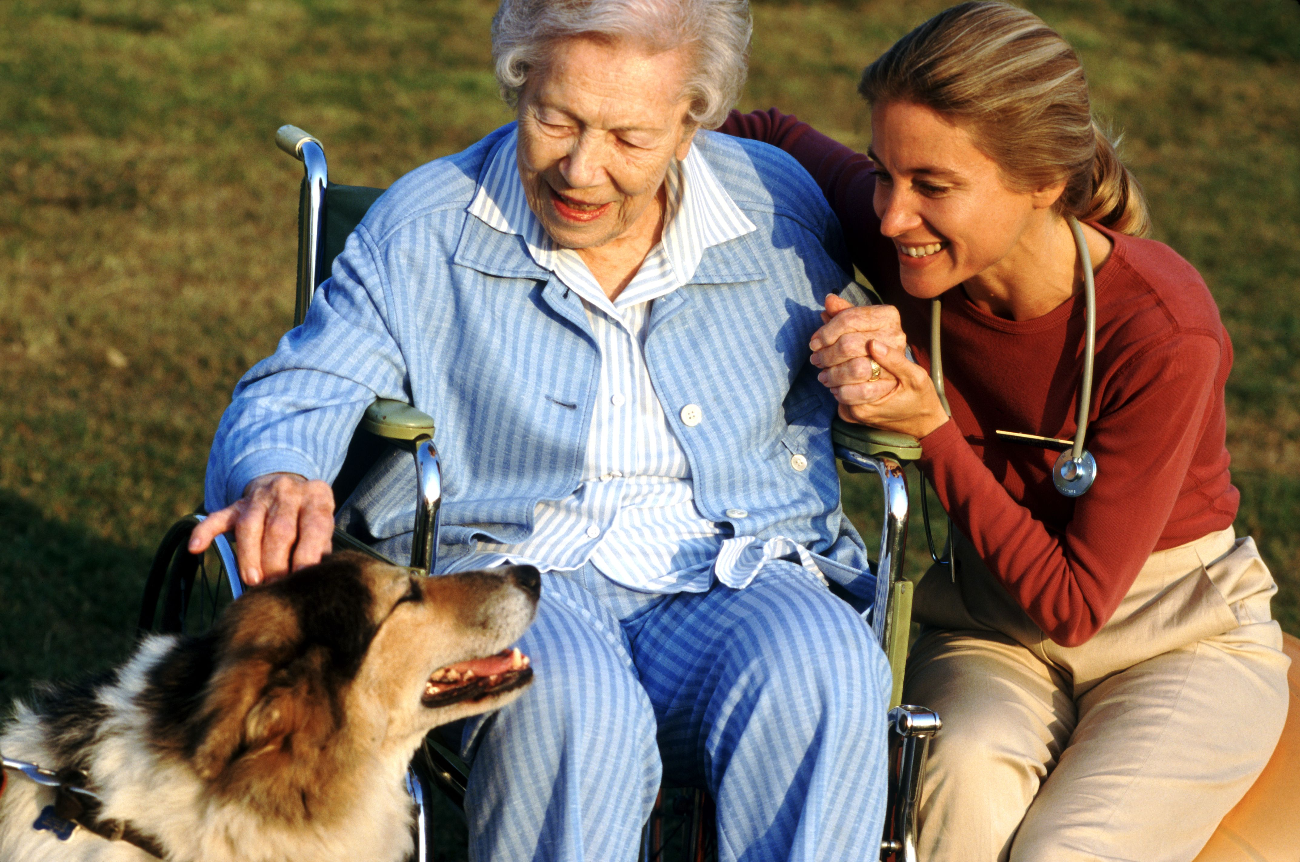 Animal Assisted Therapy Certification Tips
