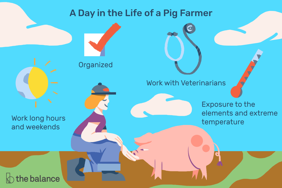 A Day in the Life of a Pig Farmer: Organized, work long hours and weekends, work with veterinarians, exposure to the elements and extreme temperature