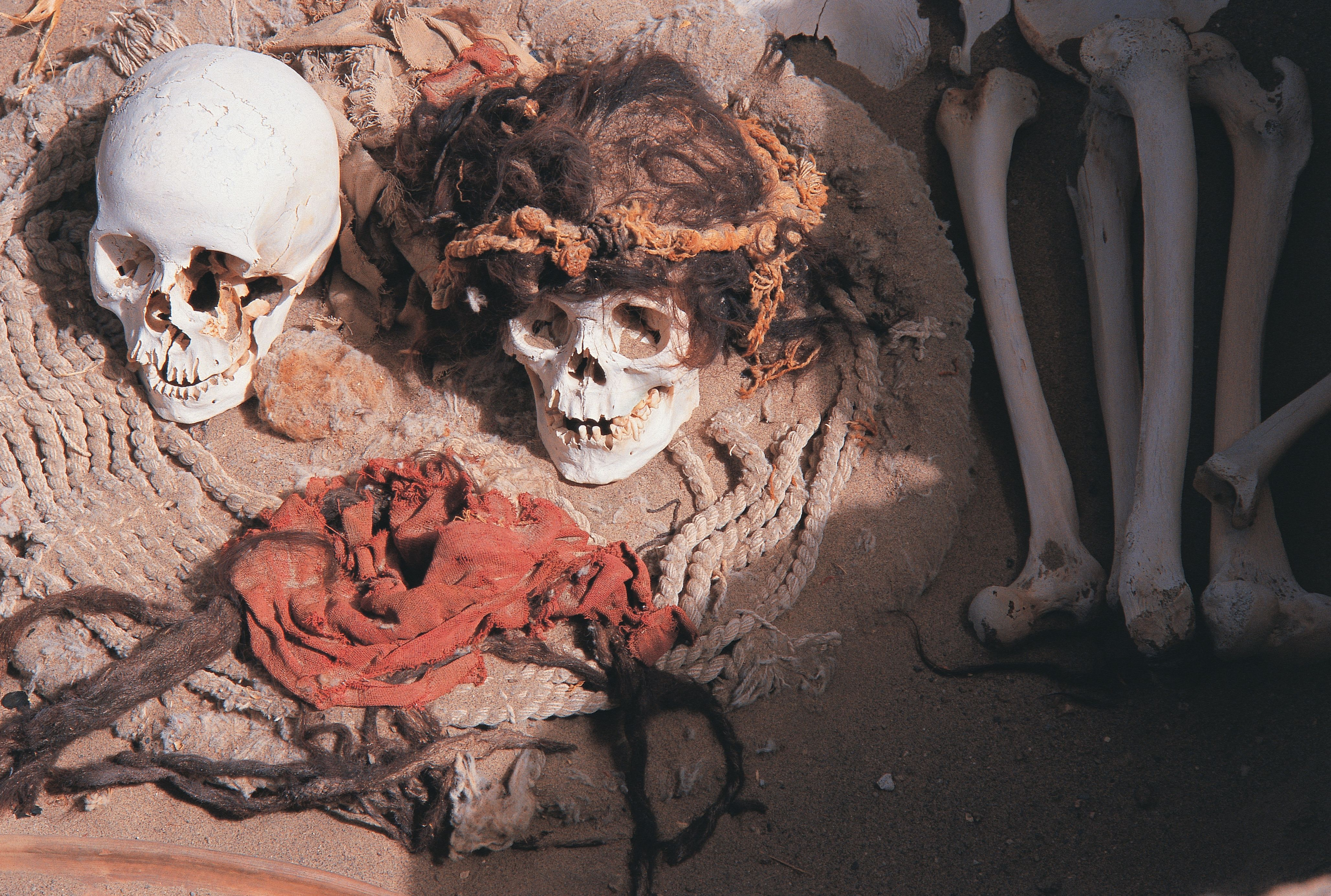Archaeological site with bones and artifacts