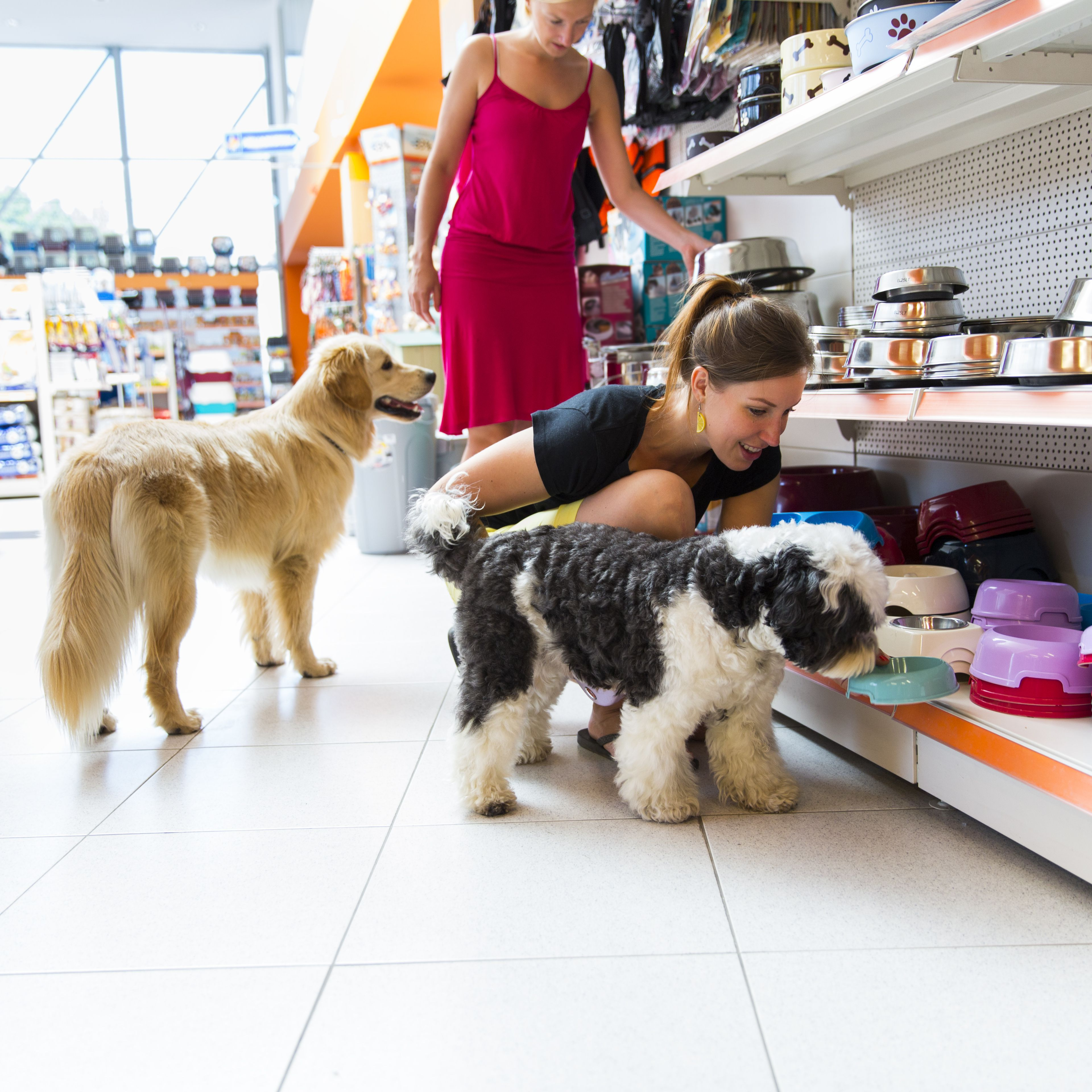 Marketing Strategy for Pet Shops