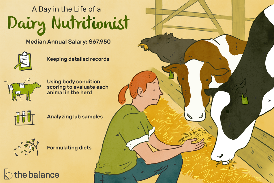 """Image shows a woman kneeling on the ground feeding hay to three cows. Text reads: """"A day in the life of a dairy nutritionist: keeping detailed records. Using body condition scoring to evaluate each animal in the herd. Analyzing lab samples. Formulating diets. Median annual salary: $67,950"""""""