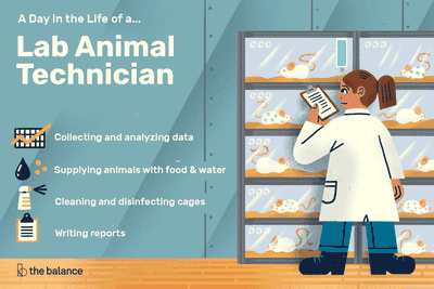 A day in the life of a lab animal technician: Collecting and analyzing data, supplying animals with food and water, cleaning and disinfecting cages, writing reports