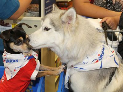 PetSmart in one example of a pet business that has elevated in-store events